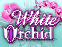 Азартные видеоигры онлайн White Orchid в клубе Vulcan